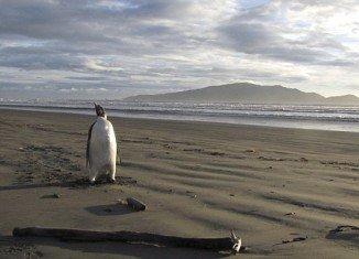 Happy Feet on Peka Peka Beach in New Zealand