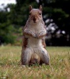 Clips with the squirrel's nuts were posted on Youtube and social networks