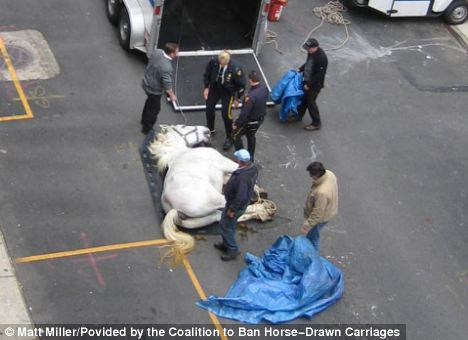 The horse collapsed and died on West 54th Street near Eighth Avenue at about 9.30 am