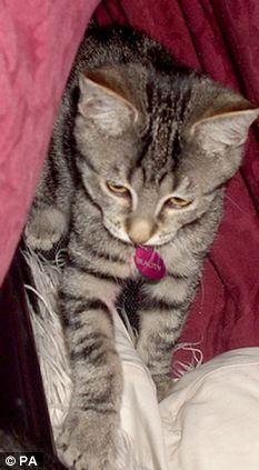 The stolen kitten Beauty