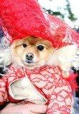 Tompkins Square Park Halloween Dog Parade, Lady Gaga