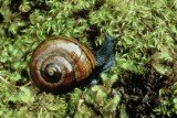 800 endangered Powelliphanta giant land snails, were accidentally frozen to death by conservationists in New Zealand