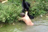 """An amateur cameraman has captured the strange moment Joao Leite Dos Santos, a drunk zoo visitor jumped into a monkey enclosure to """"play with them"""", and ended up with severe bite marks after the animals attacked"""
