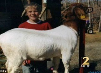 Ben Ellis, who was a freshman at Gilmer County High School, was the youngest of four children and was active in the Future Farmers of America, winning competitions for his goats
