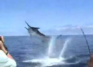 Stephen Schultz, a young fisherman from Marietta, Georgia, cheated death after a 600lb black marlin leapt out the water and speared him in the mouth with its sharp spear-like bill