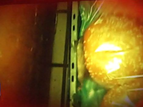 The shocking video allegedly shot in a back storage room on November 14 appears to show a mouse scurrying around a bag of hamburger buns making contact with dozens of buns photo