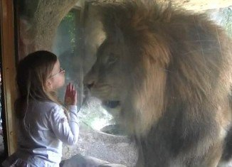 Three-year-old Sofia Walker refused to back down when a lion viciously lashed out at her at Wellington Zoo in New Zealand last week