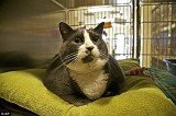 Walter, the fattest cat at the shelter, was adopted by a Portland, Oregon couple who were moved by his story of