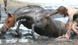 Exhausted and mud-splattered, Nicole Graham clung to her trapped horse Astro for three hours keeping his head high in a race against the tide