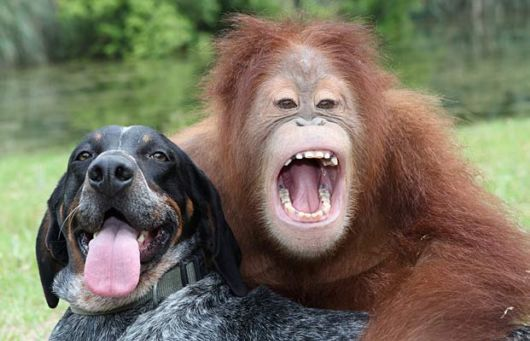 In the study, the dogs did better than the chimps, despite the chimpanzee's brain being the more similar to the human brain