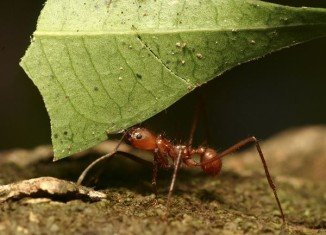 "Scientists discovered that ant colonies are able to form a ""collective memory"" of their enemies"