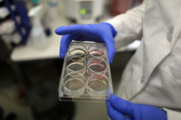 "US scientists have made a breakthrough discovery finding stem cells in human ovaries from which it may one day be possible to produce an ""unlimited"" supply of eggs"