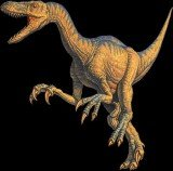 A bone of a large flying reptile found in the gut of a Velociraptor is believed to be the dinosaur's last meal