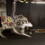 Four-legged robot Cheetah set a new world speed record