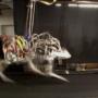 Four-legged robot Cheetah set a new world speed record