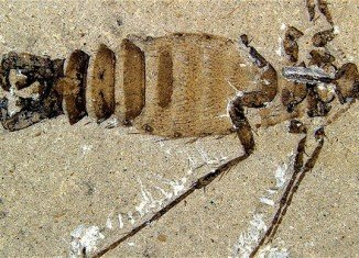 Chinese researchers have unearthed two giant blood-sucking insects at different dig sites that are the largest known flea type creatures of their size