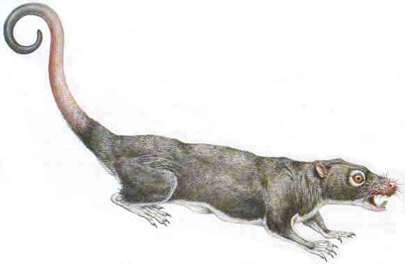 Multituberculates are the only major branch of mammals to have become completely extinct and have no living descendants photo