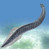 Pikaia gracilens, a two-inch-long worm-like sea creature, is the earliest-known animal to have the beginnings of a backbone, according to Cambridge University scientists