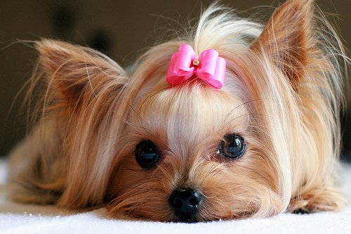 The American Pet Products Association (APPA) says spending on pets in the US passed $50 billion in 2011