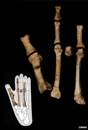 The fossilized bones of a foot were discovered in Ethiopia and dated to be 3.4 million years
