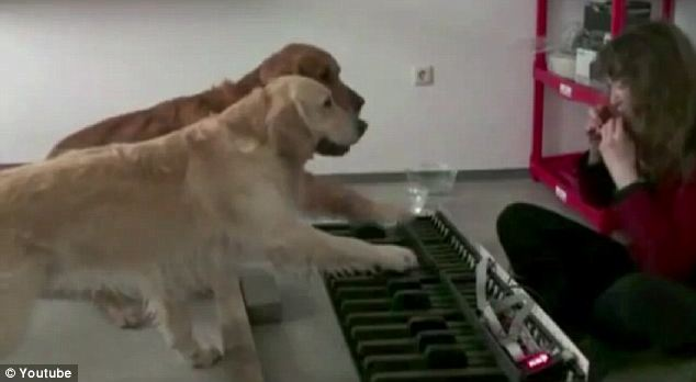 The musical dogs enthusiastically play The Flea Waltz on an over-sized keyboard