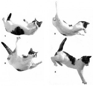 Veterinarians and biologists say that cats' remarkable ability to survive falls from great heights is a simple and predictable matter of physics, evolutionary biology, and physiology