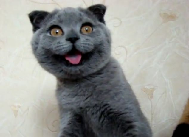 Ksenia, a Scottish Fold feline from Russia, is what thousands of internet users are calling the world's cutest cat