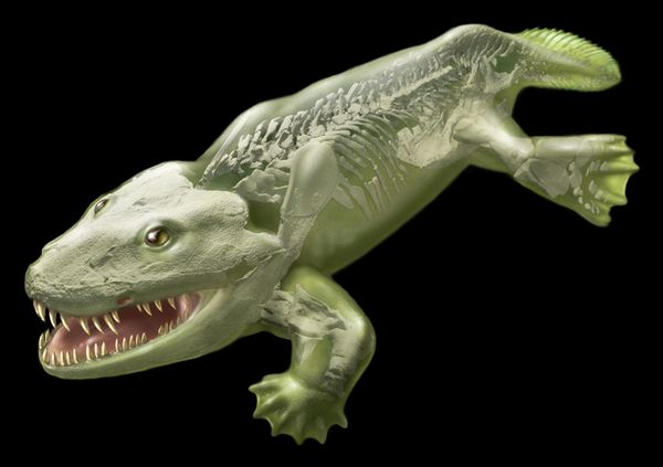 British scientists have discovered that Ichthyostega one of the first creatures to step on land could not have walked on four legs as 3D computer models show photo