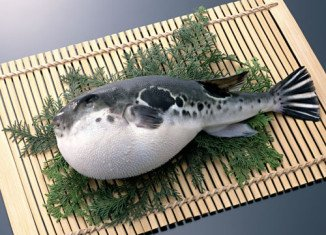 Fugu, or blowfish, a Japanese delicacy, is so poisonous that the smallest mistake in its preparation could be fatal