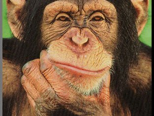 "Researchers have found that chimpanzees and orangutans really do have personalities ""like people"""