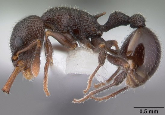 A US scientific team is embarking on a mission to capture a 3D image of every ant species known to science
