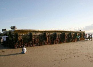 A huge dock torn from a Japanese port by March 2011 tsunami has washed up in the US state of Oregon