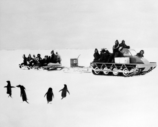Accounts of unusual sexual activities among Adelie penguins, observed a century ago by Dr. George Murray Levick, a member of Captain Scott's polar team, are finally being made public