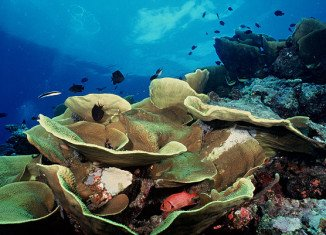 Australia announces that it will create the world's largest network of marine parks ahead of the Rio+20 Earth Summit
