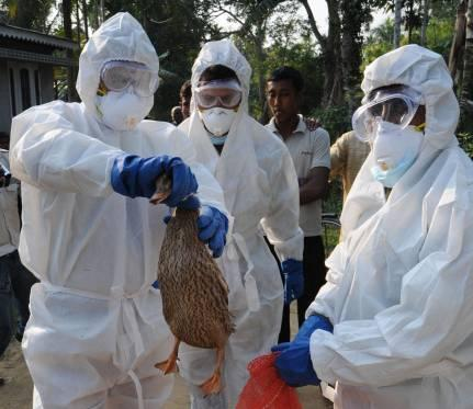 Scientists warn the H5N1 bird flu virus could change into a form able to spread rapidly between humans