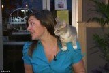 Nicole DiDonato did a live report on Thursday when a cat sneaked up from behind and jumped on the journalist's shoulder