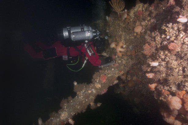 US divers have found what appear to be remains of a crew of an Army amphibious plane that went down in the Eastern St Lawrence River during World War II