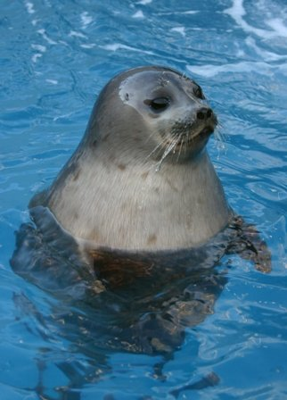 US scientists have identified a new strain of influenza in harbor seals that could potentially impact human and animal health