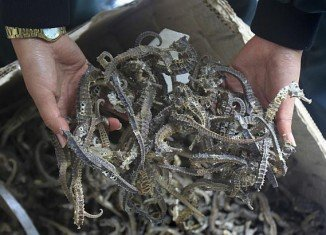 More than 16,000 dried seahorses which were to be exported illegally to Asian countries have been seized by police in Peru