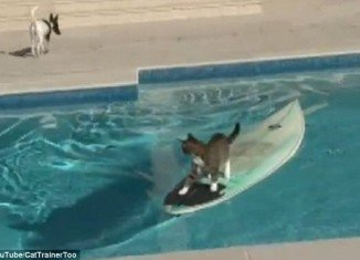 Quick-thinking cat managed to escape a pursuing pooch and surf her way to safety in a backyard pool