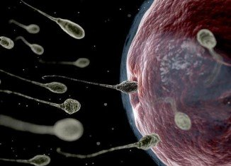 Scientists say they are a step closer in the difficult journey towards developing a male contraceptive pill, after successful studies in mice
