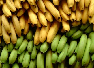 Climate change could lead to bananas becoming a critical food source for millions of people