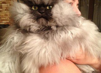 Colonel Meow has won tens of thousands of admirers