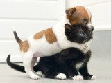 Kitty and Buttons become inseparable at Battersea Cats and Dogs Home