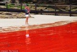 Tourists heading for famous Bondi Beach were left high and dry today after a rare natural phenomenon turned the water blood red