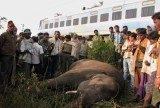 Five elephants have been killed after being hit by a passenger train in the eastern Indian state of Orissa