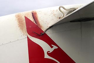 A 10 ft scrub python was battling to retain its grip on the wing as a Qantas plane made its way between the Australian town of Cairns and Port Moresby in Papua New Guinea photo
