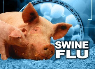 At least one in five people, including half of schoolchildren, were infected with swine flu during the first year of the pandemic in 2009, according to data from 19 countries