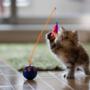 Daisy, the world's cutest cat, becomes internet sensation