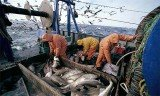 European Union fisheries ministers have agreed to phase out the controversial practice of dumping unwanted fish